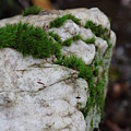Forest Rock With Moss by Pamela Smith
