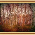 Forest Scene. L A With Decorative Ornate Printed Frame. by Gert J Rheeders
