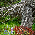 Forest Scene by Tim Newton