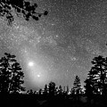 Forest Silhouettes Constellation Astronomy Gazing by James BO  Insogna