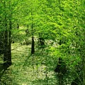 Forest So Green by Florene Welebny