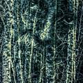 Forest Spirit by Jean OKeeffe Macro Abundance Art