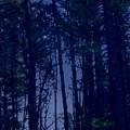Forest Starlight by Paul Sachtleben