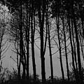 Forest by Stefan Breton