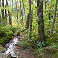 Forest Stream by Alison Heckard