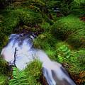 Forest Stream. Benmore Botanic Garden by Jenny Rainbow