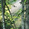 Forest Sunbeam by Francesa Miller