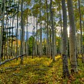 Forest Sunlight by Linda Weyers