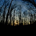 Forest Sunset by Shelley Smith