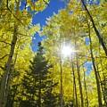 Forest Sunshine by Barbara Stellwagen