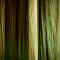 Forest Texture by Thorsten Scheuermann