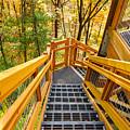 Forest Tower Steps by Kenneth Sponsler