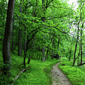 Forest Trail In Patapsco Valley State Park by James Brunker
