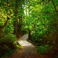 Forest Trail by Sharon Talson