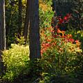 Forest Trails by Lynn Bauer