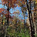 Forest Veteran by Michiale Schneider