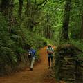 Forest Walkers, El Camino, Spain by Fran West