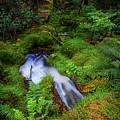Forest  Water Stream. Benmore Botanic Garden by Jenny Rainbow