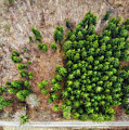 Forest With Green Trees From Above by Matthias Hauser