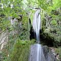 Forest With Waterfall by Goce Risteski