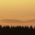Forested Hills In Early Morning Mist by Michal Boubin