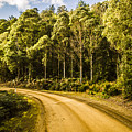 Forestry Trails And Scenic Routes by Jorgo Photography - Wall Art Gallery