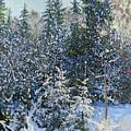 Forest's Fairy-tale. by Simon Kozhin