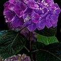 Forever Violet by Georgiana Romanovna