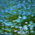 Forget-me-not Flower Patch by  Onyonet  Photo Studios