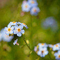 Forget Me Not by Kerri Farley