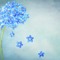 Forget-me-not by Onelia PGPhotography