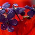 Forget-me-nots by Wolfgang Stocker