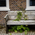 Forgotten Bench by Phyllis Taylor