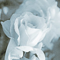 Forgotten Roses Blue by Jennie Marie Schell
