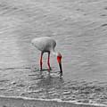 Florida Bird In Selective Color by Doug Camara