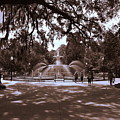 Forsyth Park Sepia by Lisa Wooten