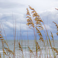 Fort Fisher by Erin McCandless