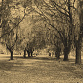 Fort Frederica Oaks by Katherine W Morse