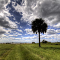 Fort Moultrie Palm  by Dustin K Ryan