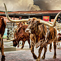 Fort Worth Stockyards by Kelley King