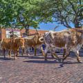 Fort Worth Stockyards Longhorn Drive by Craig David Morrison