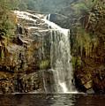 Forth Falls Tasmania by Sarah King