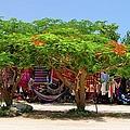 Fortune Tree by Blima Efraim