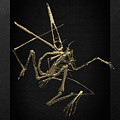 Fossil Record - Gold Pterodactyl Fossil On Black Canvas #1 by Serge Averbukh