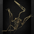 Fossil Record - Gold Pterodactyl Fossil On Black Canvas #4 by Serge Averbukh