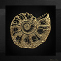Fossil Record - Golden Ammonite Fossil On Square Black Canvas #4 by Serge Averbukh