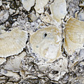 Fossil Rock Abstract 7 by Bob Slitzan