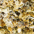 Fossil Rock Abstract 8 by Bob Slitzan