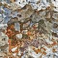 Fossil Rock Abstract 9 by Bob Slitzan