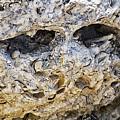 Fossil Rock Abstract - Eyes by Bob Slitzan